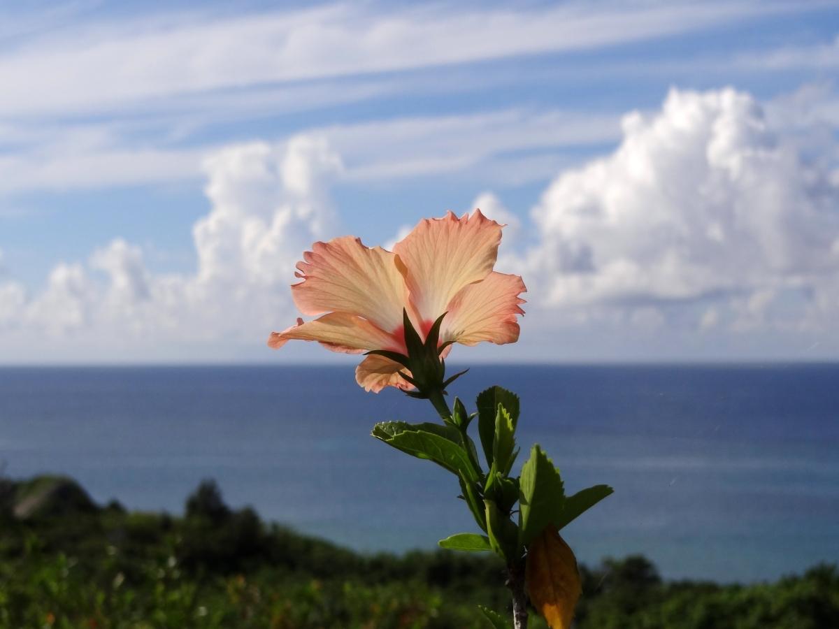 那一年, 我們吹著海風, 單車環遊石垣島!
