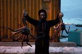 Honningsvåg港口就抓得到的帝王蟹真的好大阿