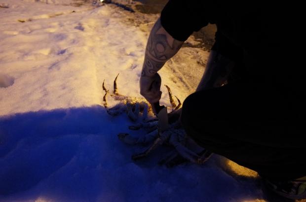 剛剛活跳跳的帝王蟹被支解了@Nordkapp Vandrerhjem Hostel